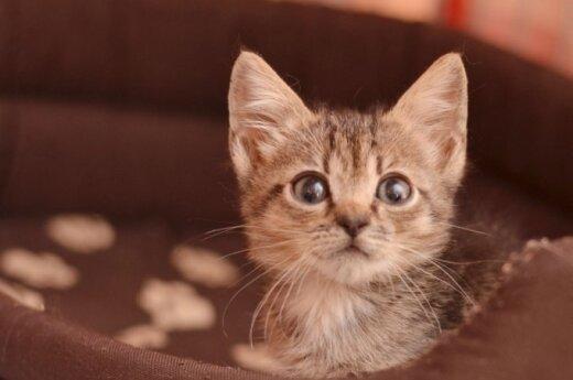 Kačiukų duetas išgelbėtas iš prekybos centro sandėlio ieško namų!
