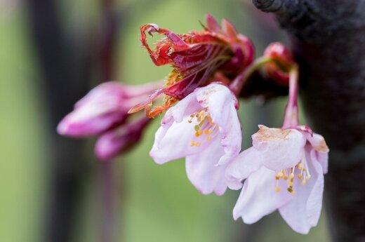 Погода: весна вернется, но не сразу