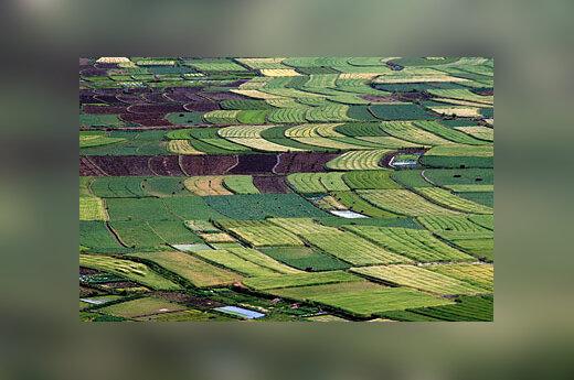 Ūkininkų laukai Kinijoje