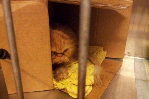 Liūdniausia katytė pasaulyje skubiai ieško namų arba laikinos globos