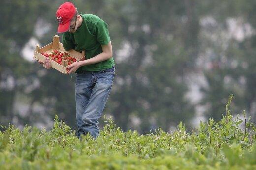 Мальдейкене: работодатели скоро попросят разрешения на ввоз рабочей силы