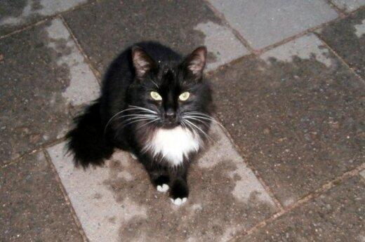 Draugiškai katytei skubiai reikalinga laikina globa