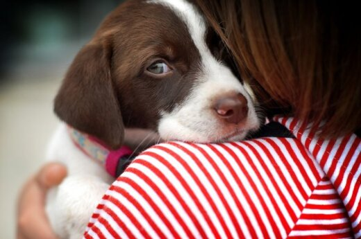 Mama, nupirk šuniuką: kaip gyvūnai gali daryti įtaką mokslo rezultatams