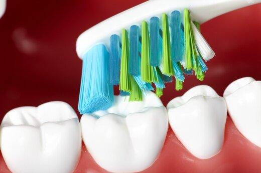 Чем больше во рту зубов – тем крепче здоровье