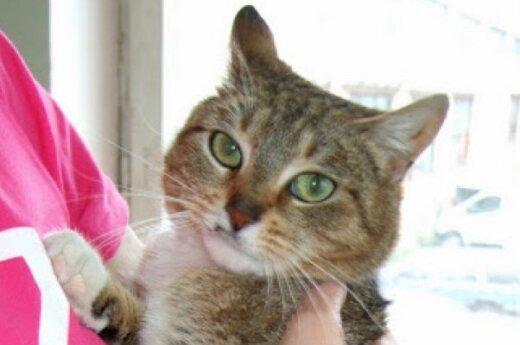 Triksė: tobula katė trimis kojomis ieško namų