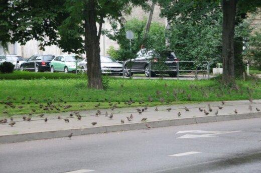 Wronięta w centrum Wilna