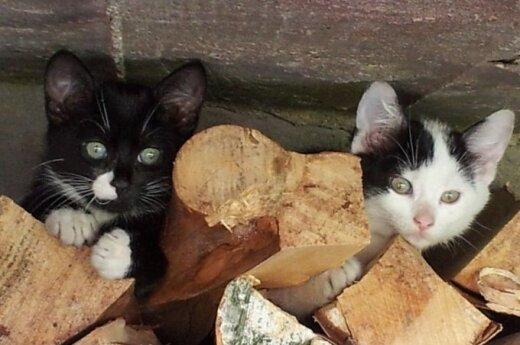 Kačiukas ir katytė ieško namų
