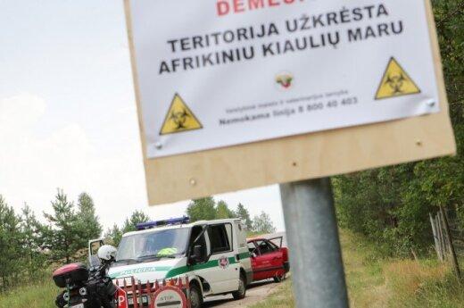 В Литве выявлен второй очаг африканской чумы свиней