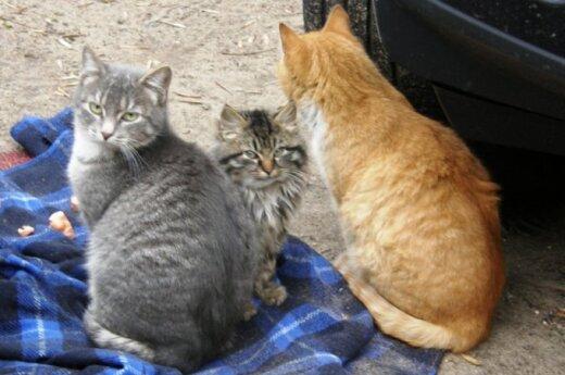 Katinėliai iš Gerosios Vilties gatvės prašo pagalbos!
