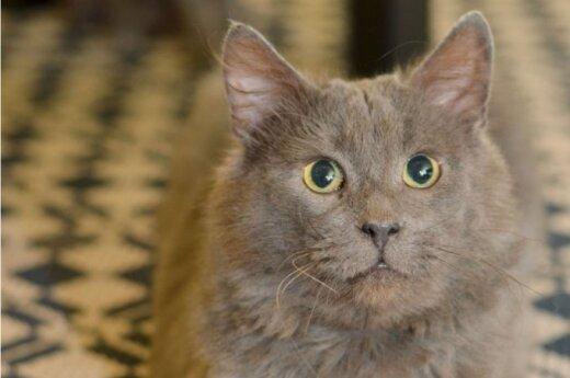 Nepaprasto katino Džentlio istorija