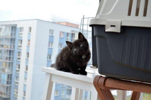 Mažas juodas kačiukas Tafis ieško namų!