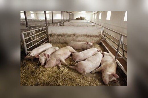 За зарезанных свиней фермерам заплатят 3,4 млн. литов
