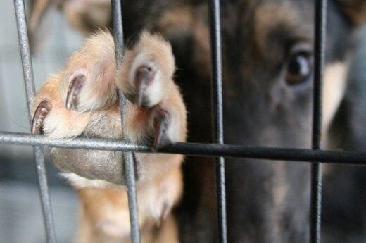 Sudie, Bobikai: penkios priežastys atiduoti gyvūną į prieglaudą