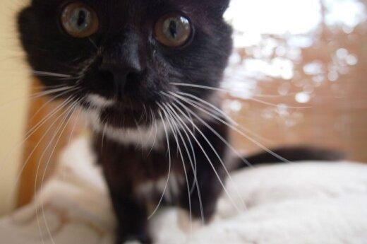 Meilumo įsikūnijimas katytė Misu ieško namų!