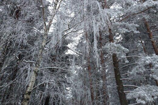 Погода: на этой неделе будет и снег, и мороз