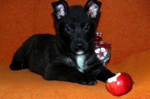 2 mėn. šuniukui Šukiui skubiai reikalinga globa arba namai: padėkite