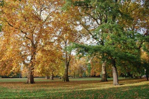 Aplinkos tvarkymas rudenį: naudingi patarimai