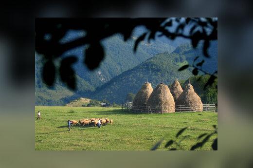 Albanai berniukai gano avis šalia Kosovo kalnų netoli Pristinos.