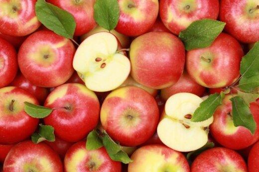 Белорусские яблоки заменят россиянам польские