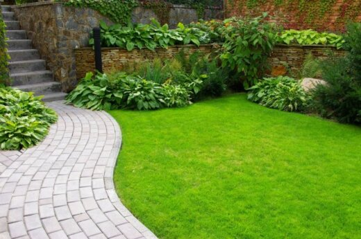 5 žingsniai iki nepriekaištingos vejos