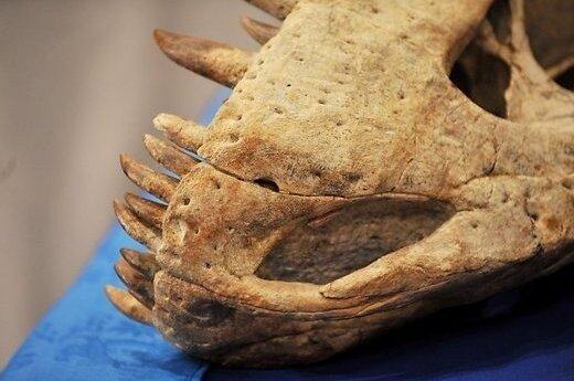 Таинственные следы в Монголии: подозревают гигантскую рептилию