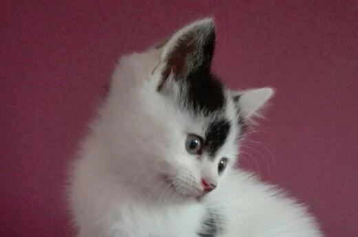 Padėkite katinėliui Oriui rasti tinkamus namus!