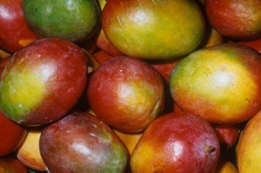 Mango vaisiai