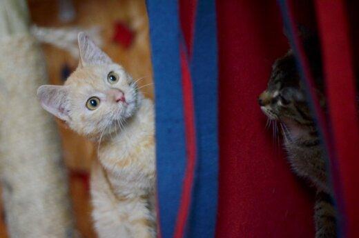 Retos spalvos katytė Endė ieško namų!