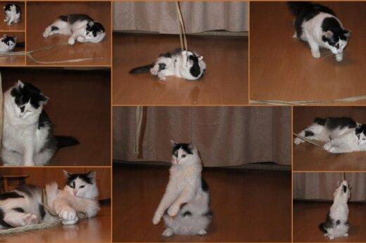 Melisa - katė, vis dar laukianti savo namų