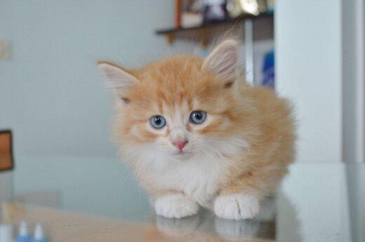 Ieškomi gyvūnus mylintys savanoriai