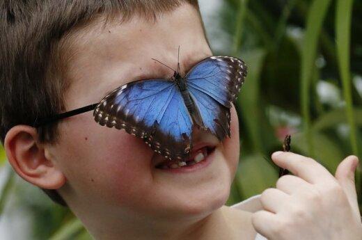 """В Лондоне - выставка """"Поразительные бабочки"""""""