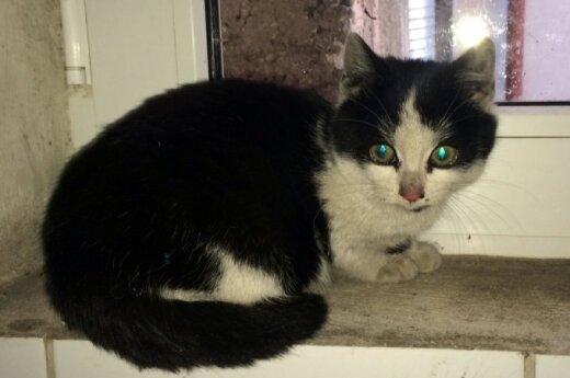 Skubu: du maži kačiukai nenori grįžti į gatvę