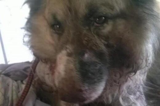 Nepaaiškinamo žiaurumo istorija: šunelį užkasė gyvą