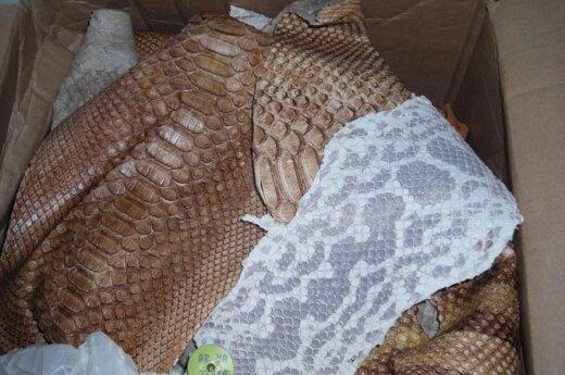 Таможенники нашли в посылке кожу анаконды
