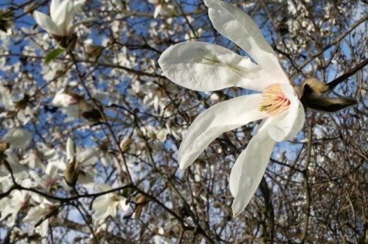 Pavasaris rodo gražiausią savo pusę