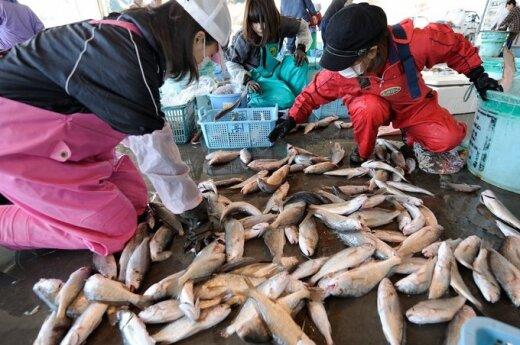Japonia: Radioaktywna ryba z Fukushimy