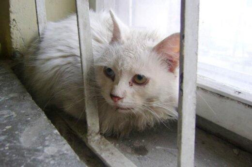 Laiptinėje rasta serganti, išskirtinio grožio katytė!