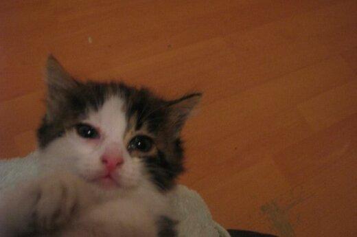 Žmogaus žiaurumą patyrę kačiukai prašo pagalbos!