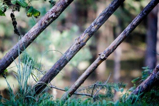 12-летняя девочка рассказала, что в лесу ее избивали вчетвером