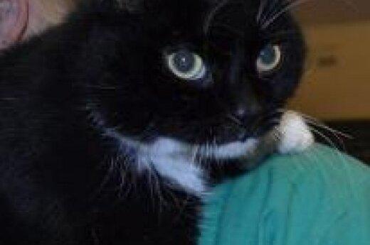 Nelaimingiausias pasaulyje katinas Vilnius vėl prašo pagalbos