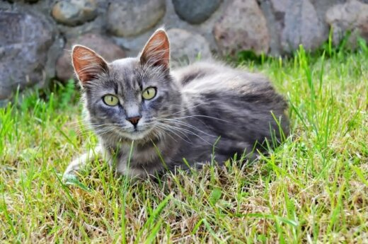 Nepaprastai daili katė ieško namų