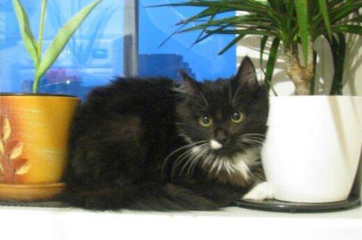 Žvėryne gimusi katytė Žvėriukė svajoja apie namus!