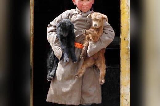 Mongolų klajoklių vaikas neša iš savo jurtos dvi mažas ožkytes