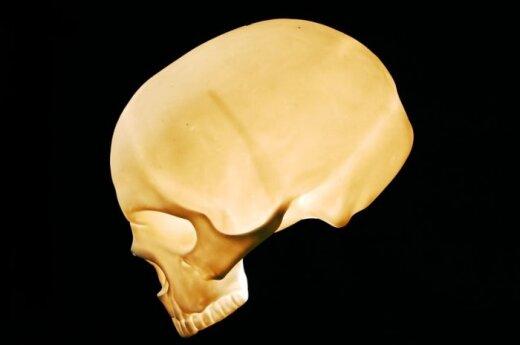 В Алитусе найден человеческий череп