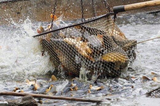 W Morzu Kowieńskim coraz mniej ryby