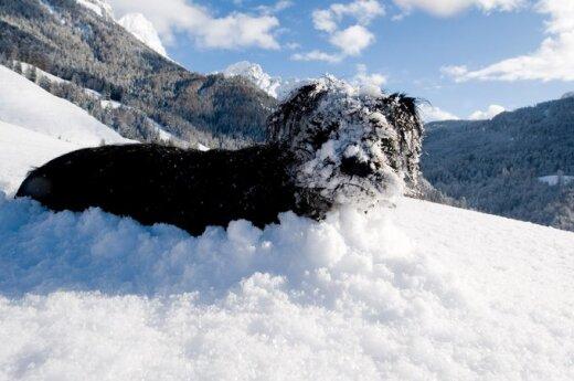 Australijskie wybrzeże zasypało śniegiem