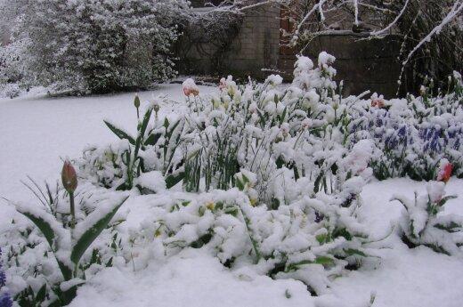 Из-за снега тысячи жителей остались без электричества