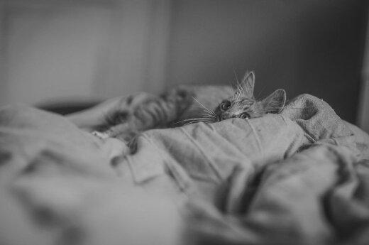 Neįprasta benamio katinėlio Kaštono istorija: gelbėjo net dešimt gaisrininkų