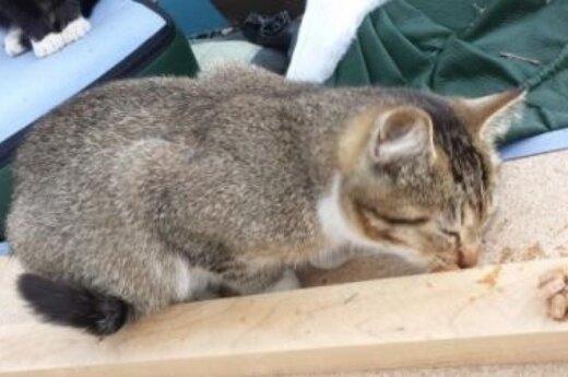 Ozo g. katinukai