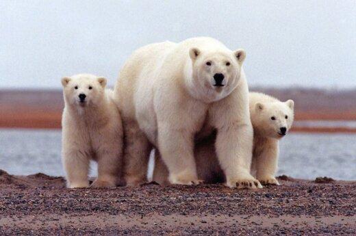 Россия обратится в ООН для расширения владений в Арктике